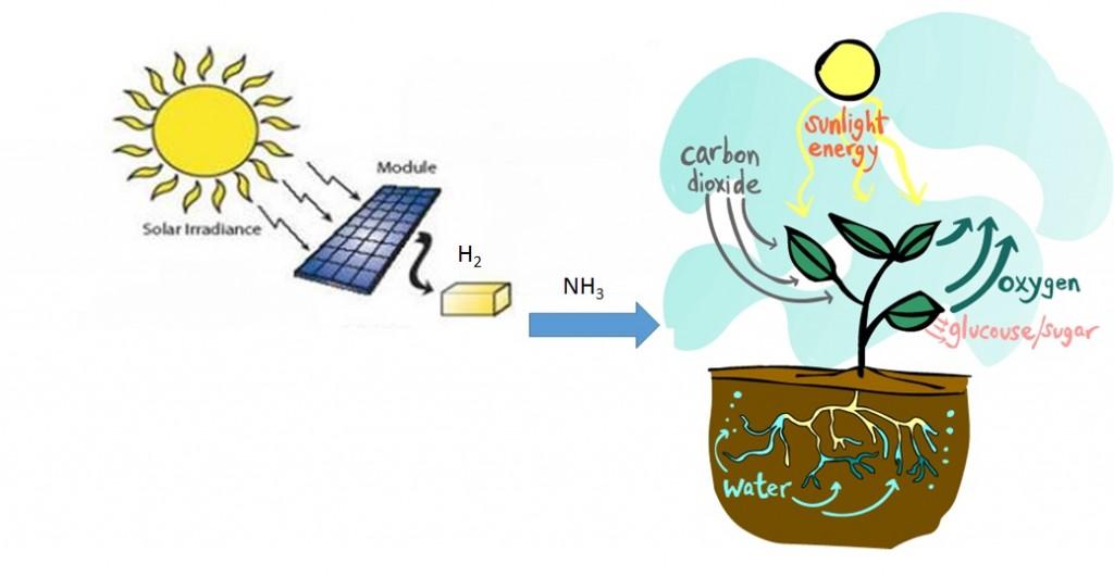 solar food